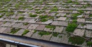 moss-on-roof-3-LARGE